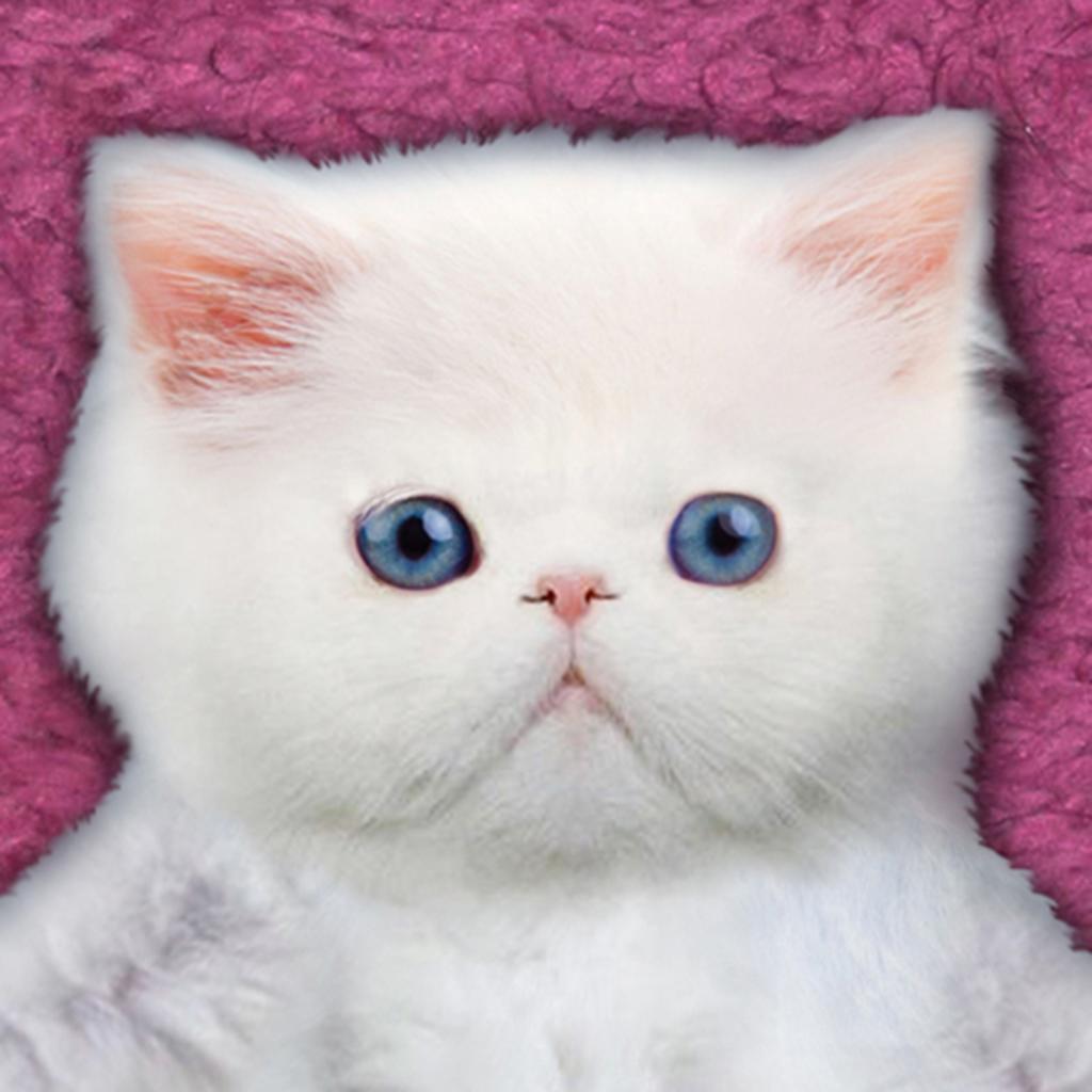 萌猫计算器:Kitten Calculator HD